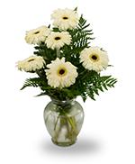 Gerbera vase